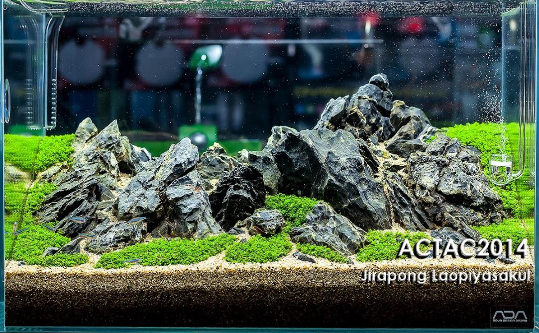 5º Jirapong Laopiyasakul - Resultado ACT (Aquascaper Club of Thailand) 2014