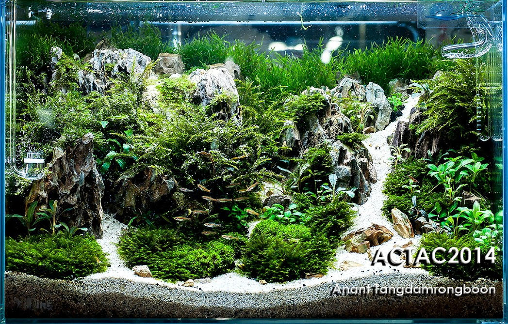 8º Anant Tangdamrongboon - Resultado ACT (Aquascaper Club of Thailand) 2014