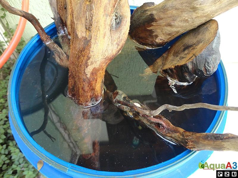 Passo a passo Coleta e tratamento de troncos para aquário