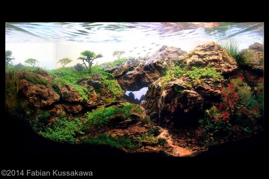 2º colocado Fabian Kussakawa International Aquascaping Contest 2014