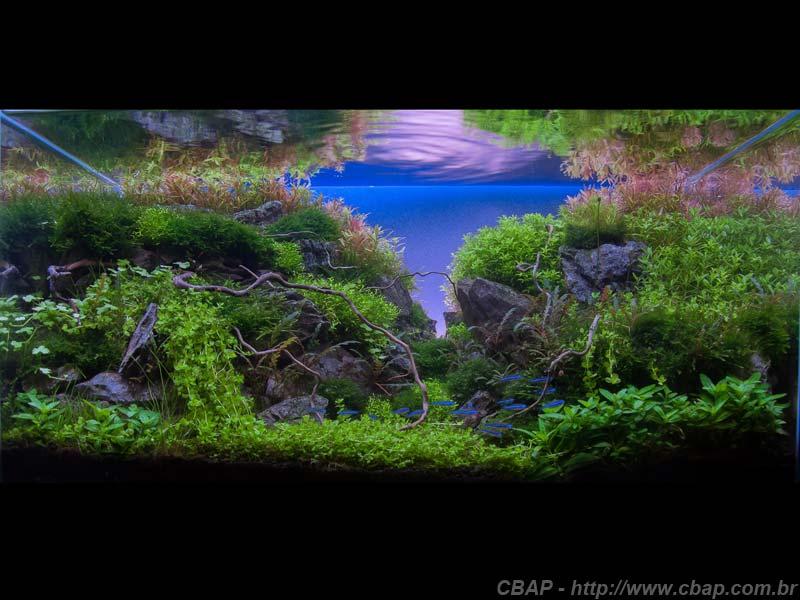7º Gregory Thom - Concurso Brasileiro de Aquapaisagismo 2014 (nano)