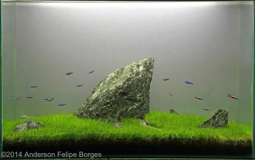 Anderson Felipe Borges -  International Aquascaping Contest 2014