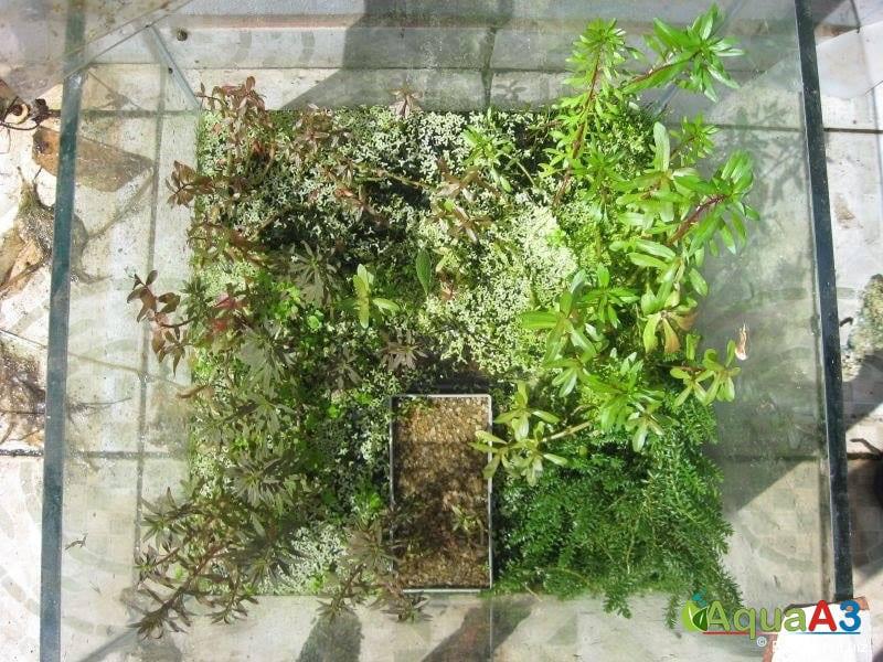 Cultivo de plantas emersas espalhado na estufa