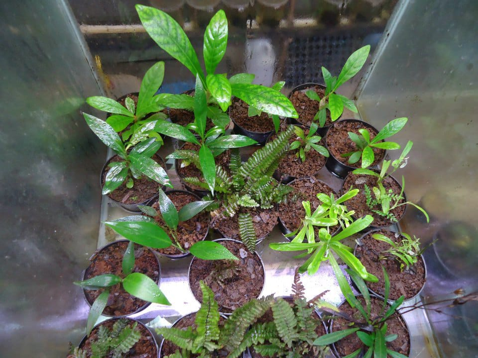 Cultivo de plantas emersas low-tech