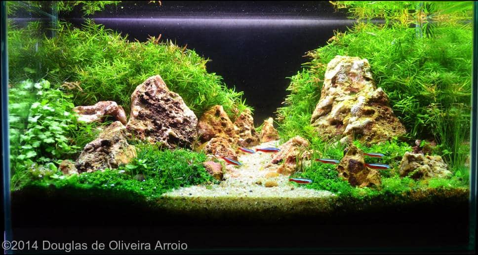 Douglas de Oliveira Arroio -  International Aquascaping Contest 2014