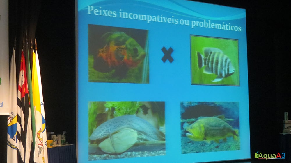 Encontro Brasileiro de Aquarismo (EBA) palestra Renato Moterani sobre incompatibilidade