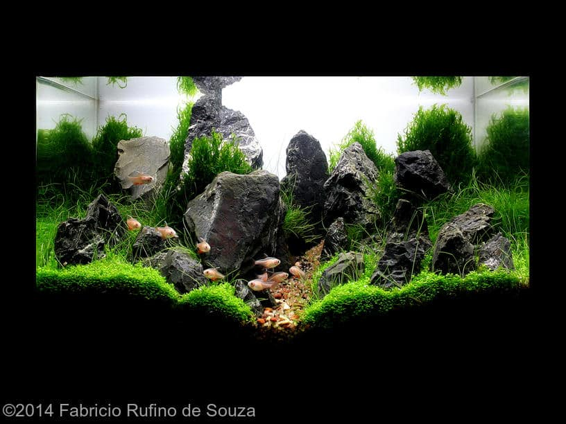Fabricio Rufino de Souza -  International Aquascaping Contest 2014