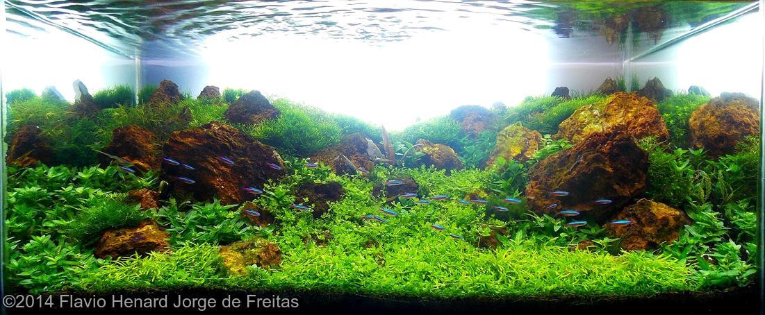 Flavio Henard Jorge de Freitas -  International Aquascaping Contest 2014