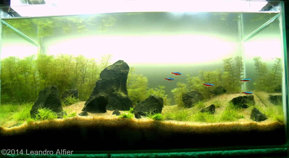 Leandro Alfier -  International Aquascaping Contest 2014