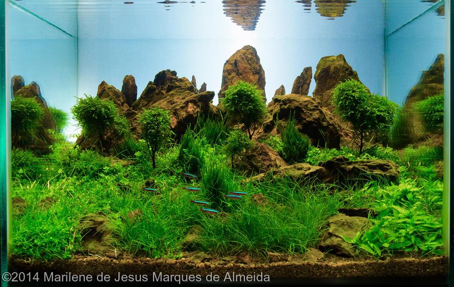 Marilene de Jesus Marques de Almeida -  International Aquascaping Contest 2014