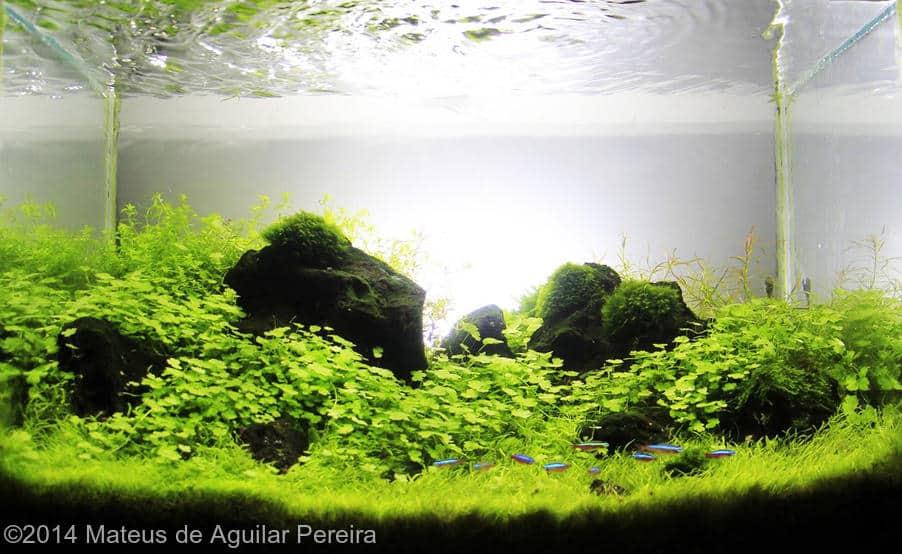 Mateus de Aguilar Pereira -  International Aquascaping Contest 2014