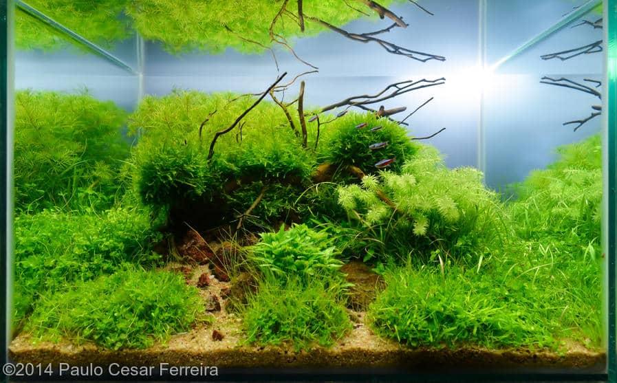 Paulo Cesar Ferreira -  International Aquascaping Contest 2014
