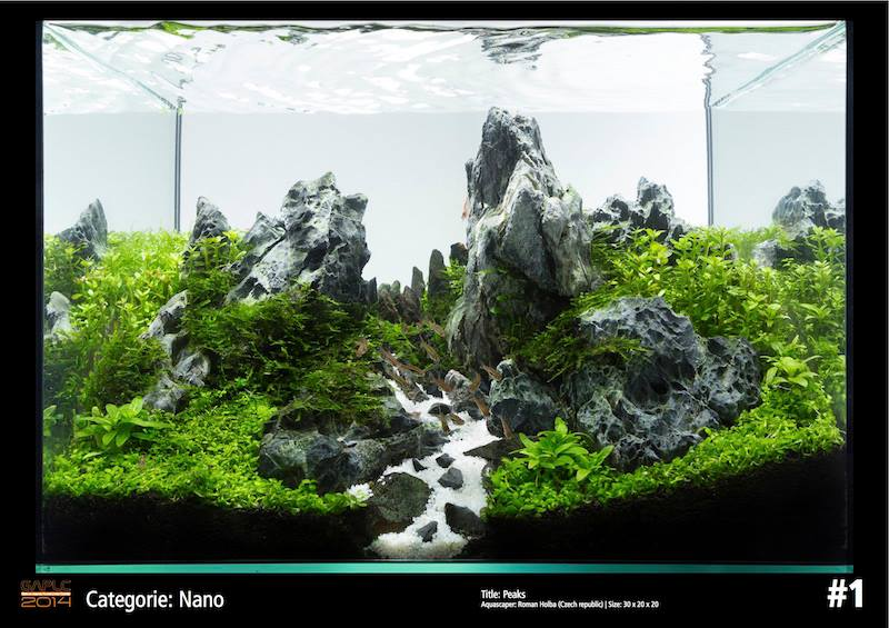 Rank 1 Nano - German Aquatic Plants Layout Contest  - GAPLC 2014