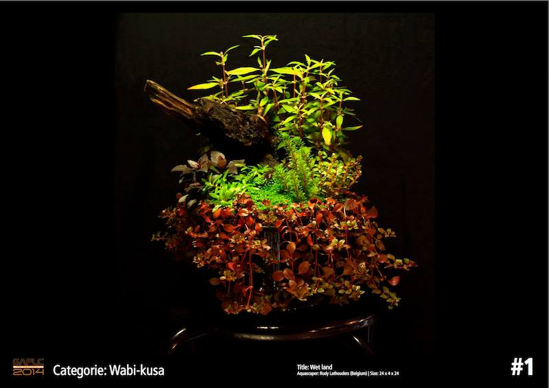 Rank 1 Wabi-Kusa - German Aquatic Plants Layout Contest  - GAPLC 2014