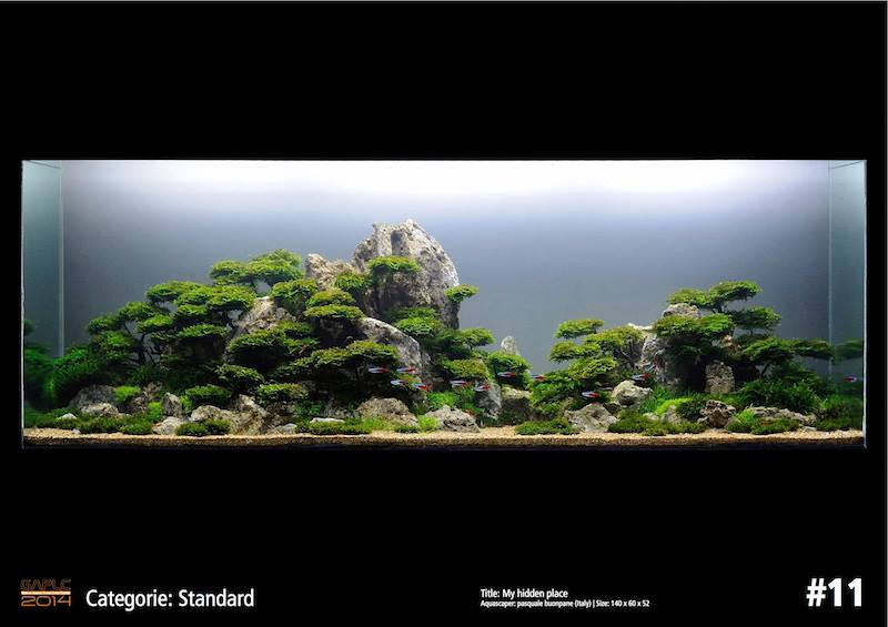 Rank 11 German Aquatic Plants Layout Contest - GAPLC 2014