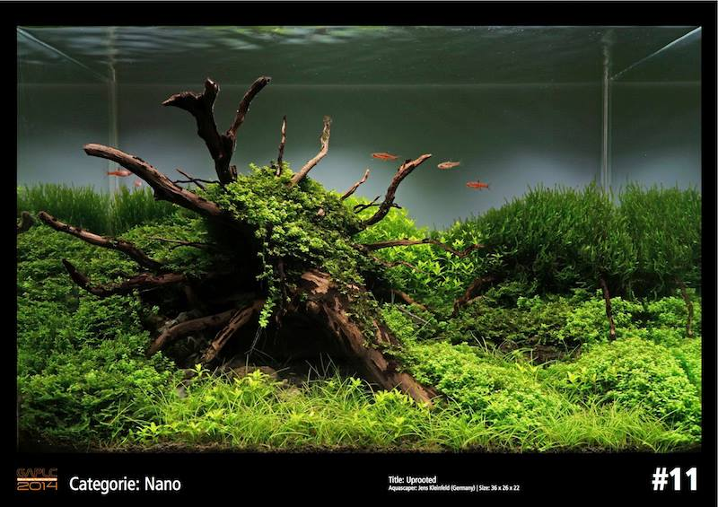 Rank 11 Nano - German Aquatic Plants Layout Contest  - GAPLC 2014