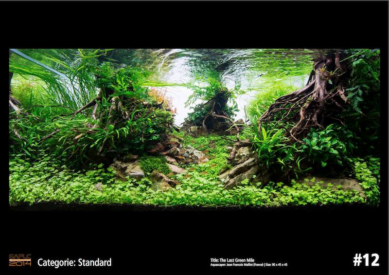 Rank 12 German Aquatic Plants Layout Contest - GAPLC 2014