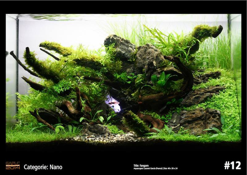 Rank 12 Nano - German Aquatic Plants Layout Contest  - GAPLC 2014