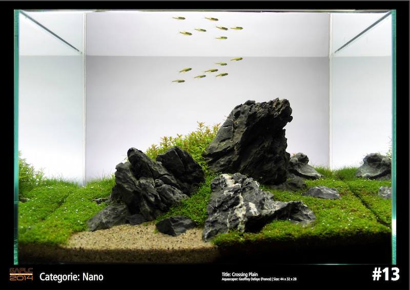 Rank 13 Nano - German Aquatic Plants Layout Contest  - GAPLC 2014