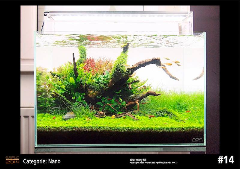 Rank 14 Nano - German Aquatic Plants Layout Contest  - GAPLC 2014
