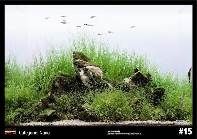 Rank 15 Nano - German Aquatic Plants Layout Contest - GAPLC 2014