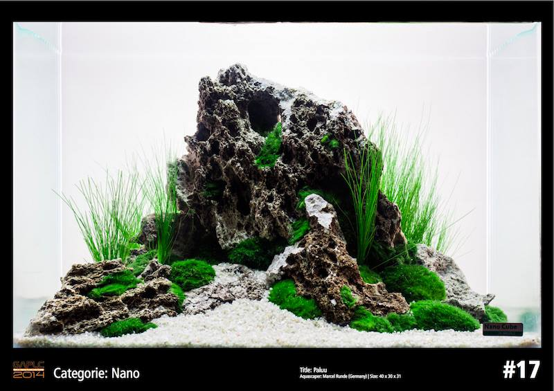 Rank 17 Nano - German Aquatic Plants Layout Contest  - GAPLC 2014