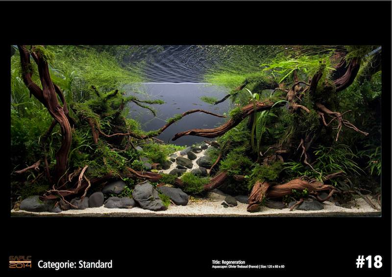 Rank 18 German Aquatic Plants Layout Contest - GAPLC 2014