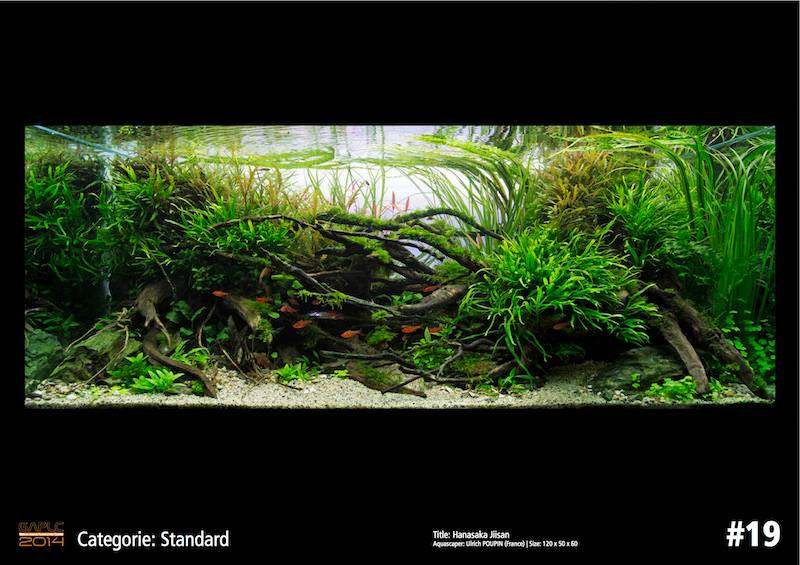 Rank 19 German Aquatic Plants Layout Contest  - GAPLC 2014