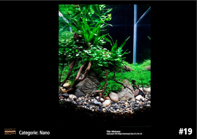 Rank 19 Nano - German Aquatic Plants Layout Contest  - GAPLC 2014