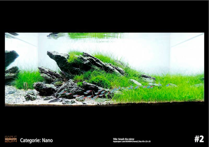 Rank 2 Nano - German Aquatic Plants Layout Contest  - GAPLC 2014
