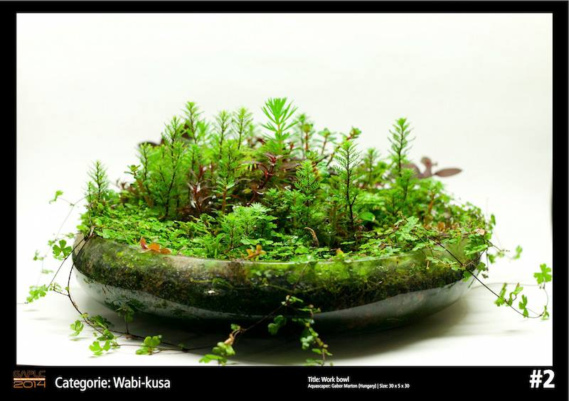 Rank 2 Wabi-Kusa - German Aquatic Plants Layout Contest - GAPLC 2014