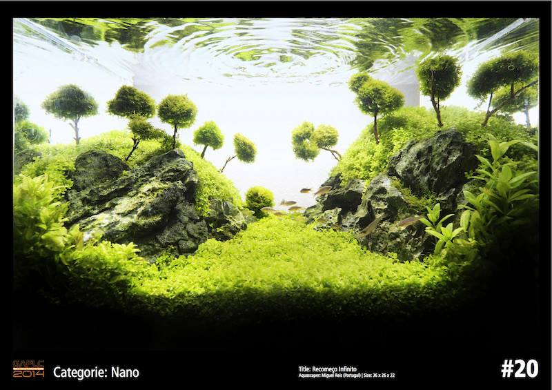 Rank 20 Nano - German Aquatic Plants Layout Contest  - GAPLC 2014