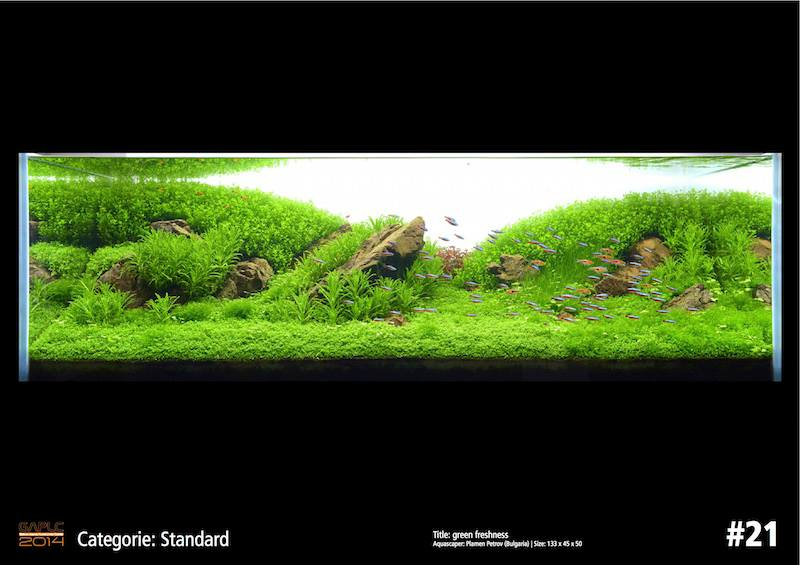 Rank 21 German Aquatic Plants Layout Contest  - GAPLC 2014