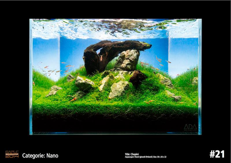 Rank 21 Nano - German Aquatic Plants Layout Contest  - GAPLC 2014