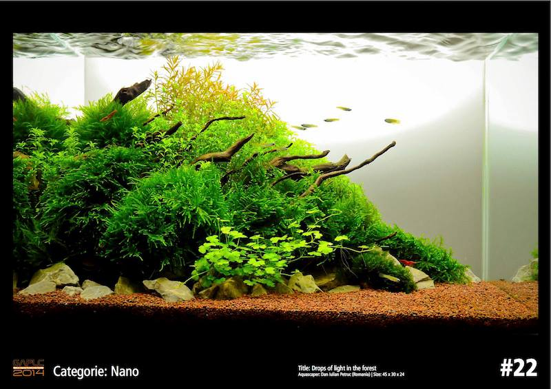 Rank 22 Nano - German Aquatic Plants Layout Contest  - GAPLC 2014