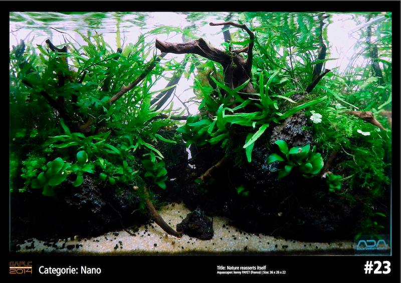 Rank 23 Nano - German Aquatic Plants Layout Contest  - GAPLC 2014