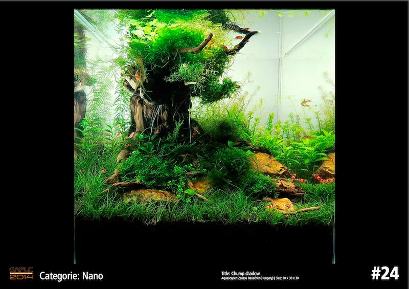 Rank 24 Nano - German Aquatic Plants Layout Contest  - GAPLC 2014