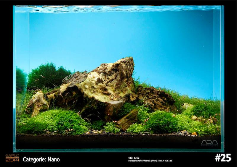 Rank 25 Nano - German Aquatic Plants Layout Contest  - GAPLC 2014