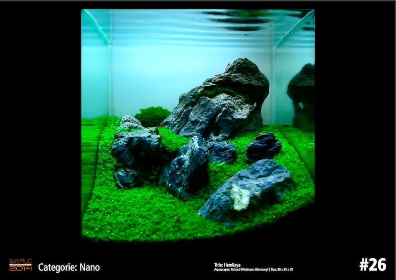 Rank 26 Nano - German Aquatic Plants Layout Contest  - GAPLC 2014