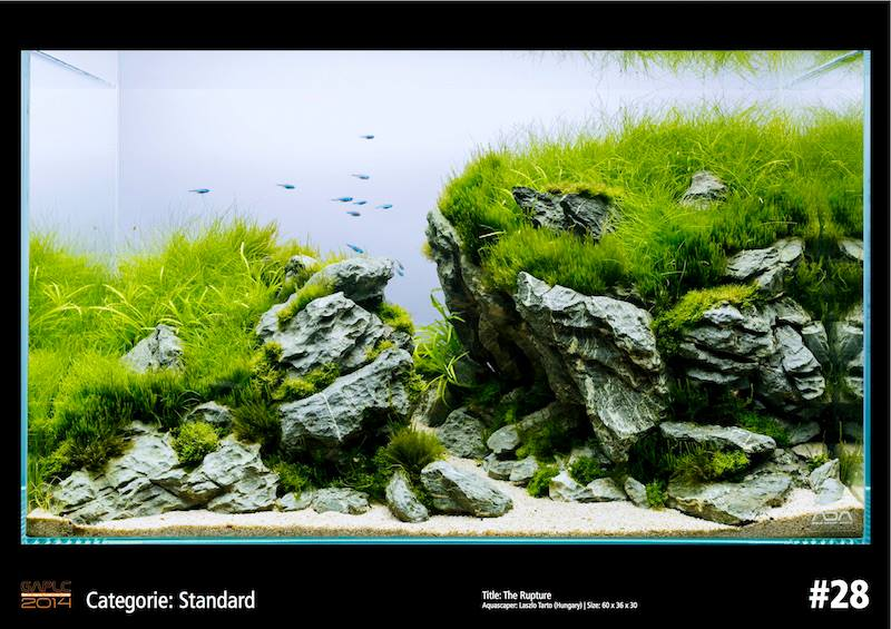Rank 28 German Aquatic Plants Layout Contest - GAPLC 2014