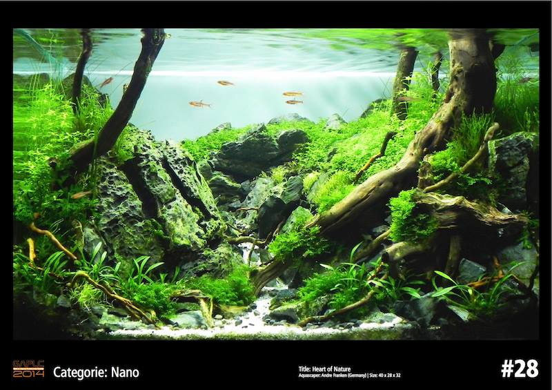 Rank 28 Nano - German Aquatic Plants Layout Contest  - GAPLC 2014