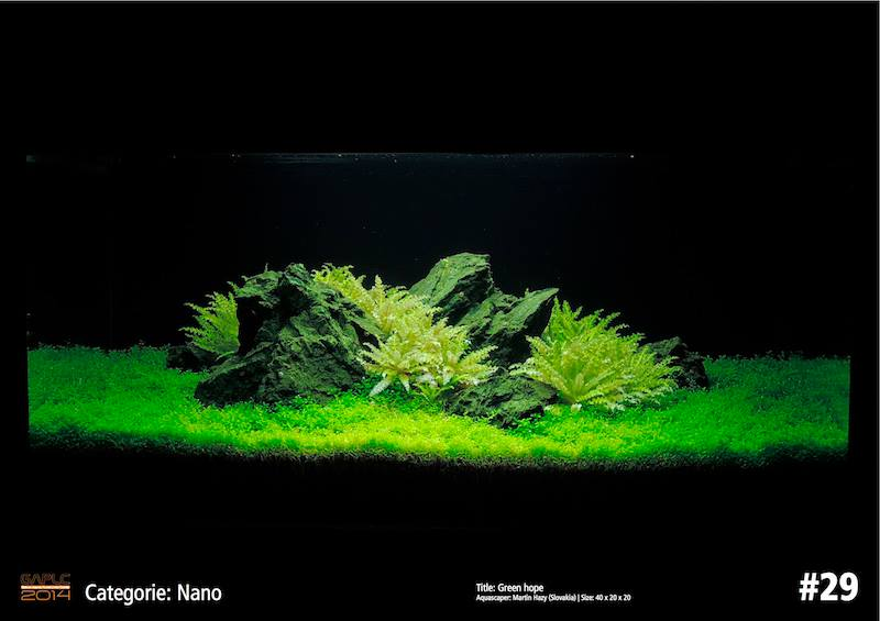 Rank 29 Nano - German Aquatic Plants Layout Contest - GAPLC 2014
