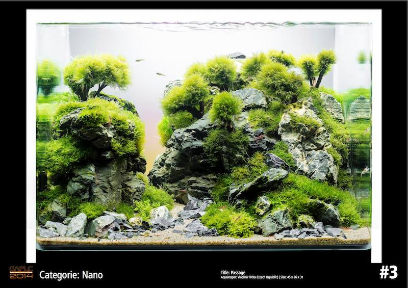 Rank 3 Nano - German Aquatic Plants Layout Contest  - GAPLC 2014