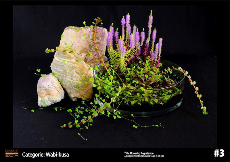 Rank 3 Wabi-Kusa - German Aquatic Plants Layout Contest  - GAPLC 2014