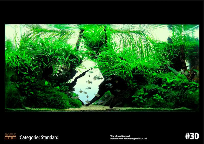 Rank 30 German Aquatic Plants Layout Contest  - GAPLC 2014