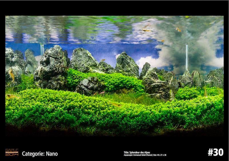 Rank 30 Nano - German Aquatic Plants Layout Contest  - GAPLC 2014