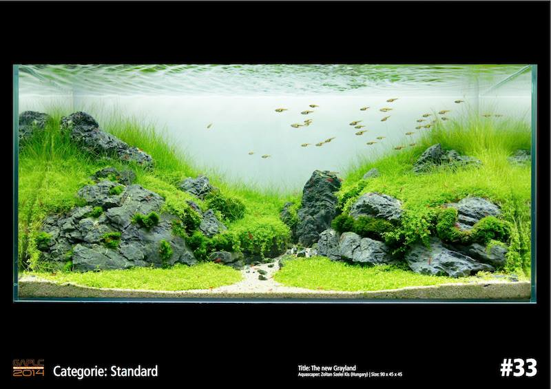 Rank 33 German Aquatic Plants Layout Contest - GAPLC 2014