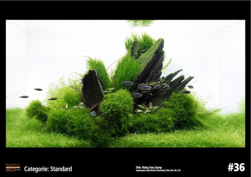 Rank 36 German Aquatic Plants Layout Contest  - GAPLC 2014
