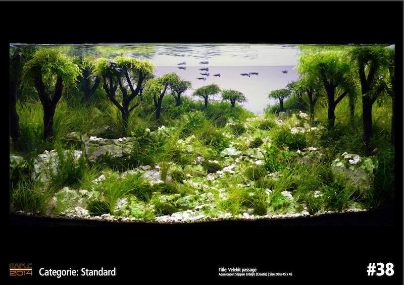 Rank 38 German Aquatic Plants Layout Contest  - GAPLC 2014
