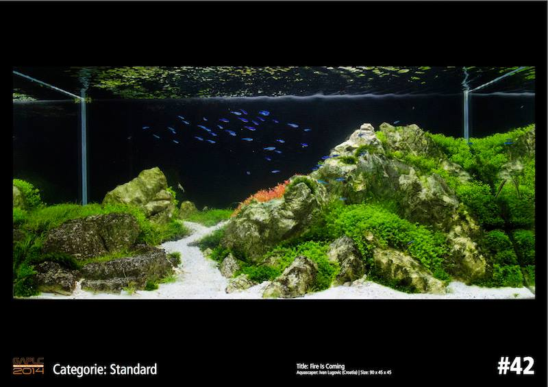 Rank 42 German Aquatic Plants Layout Contest  - GAPLC 2014